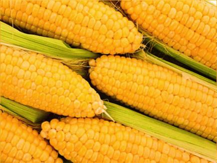 天然玉米芯